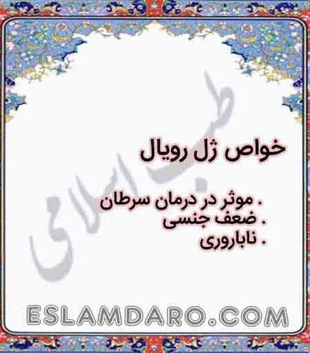 ژل رویال در طب اسلامی