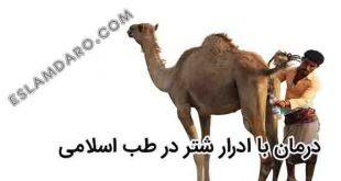 خواص درمانی ادرار شتر