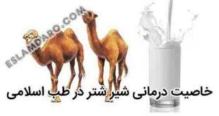 خاصیت درمانی شیر شتر