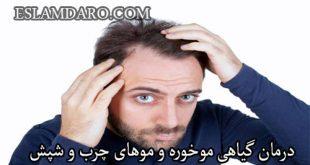 درمان گیاهی موخوره و موهای چرب و شپش