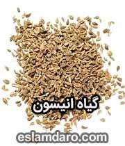 گیاه انیسون در طب اسلامی