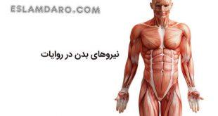4 حالت نیروی بدن