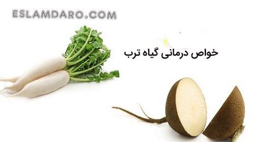 خواص درمانی گیاه ترب در طب اسلامی
